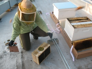 Helen installing one of our packages of bees.
